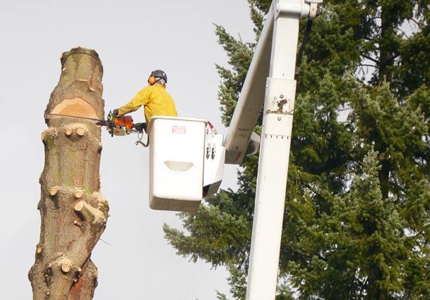 Beaver Tree service 75-foot bucket truck